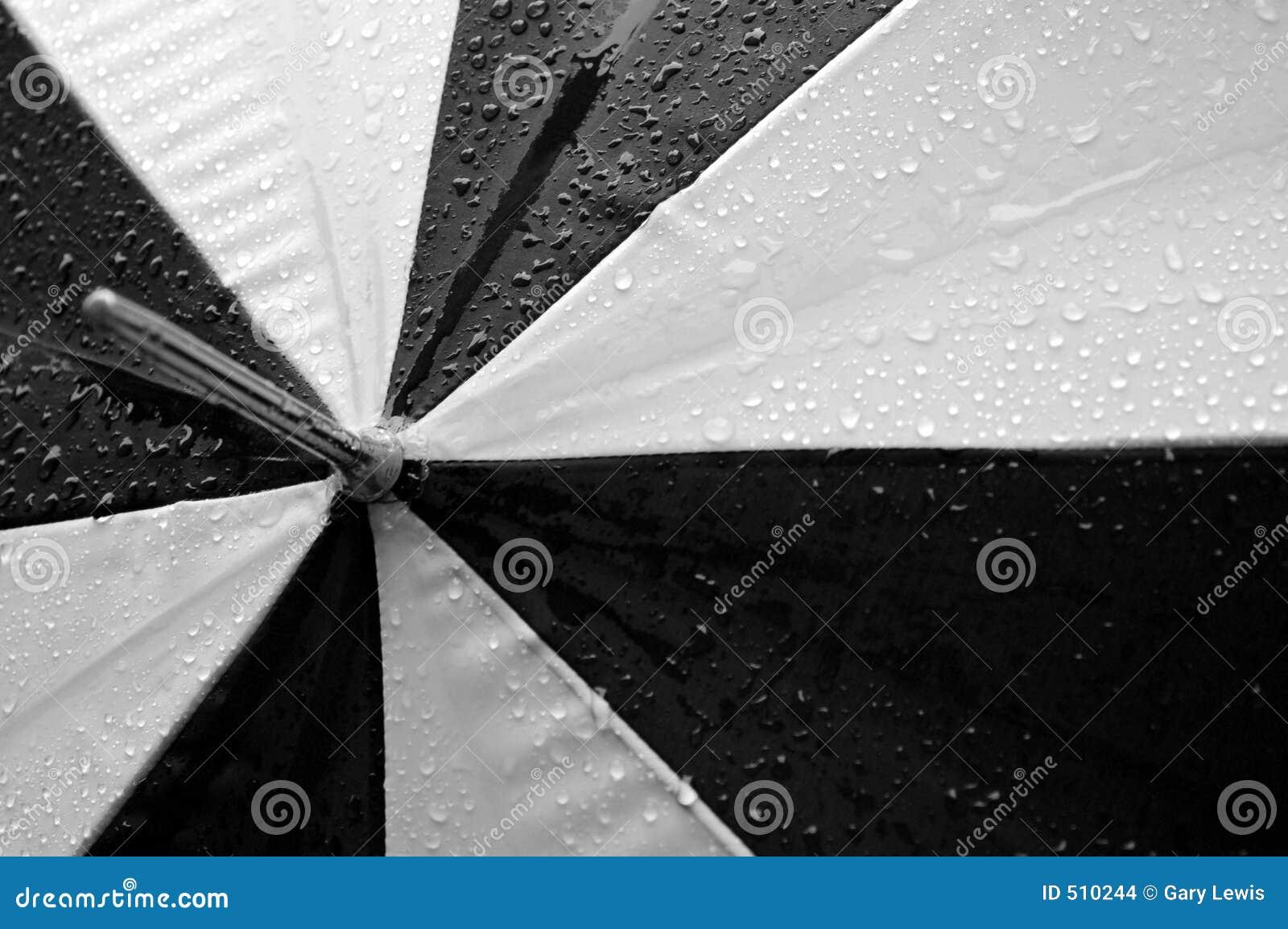 Svart paraplywhite