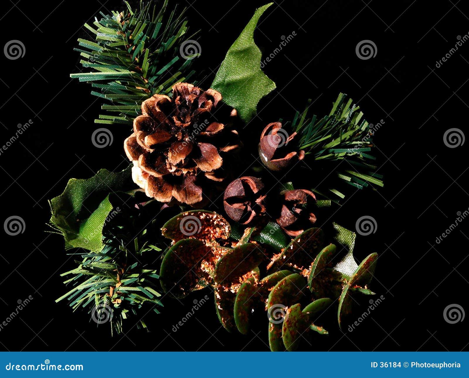 Svart pinecone