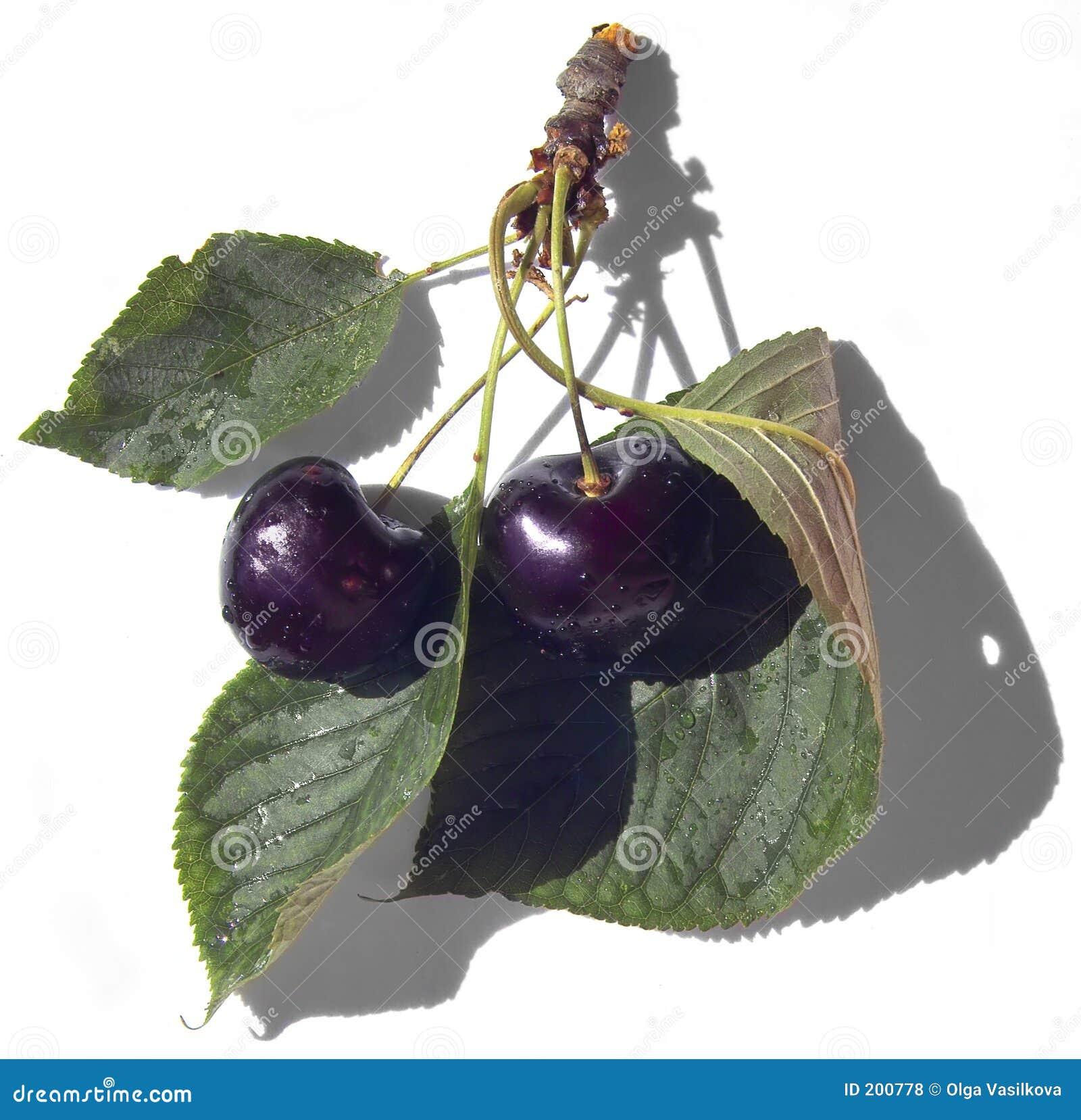 Svarta Cherry