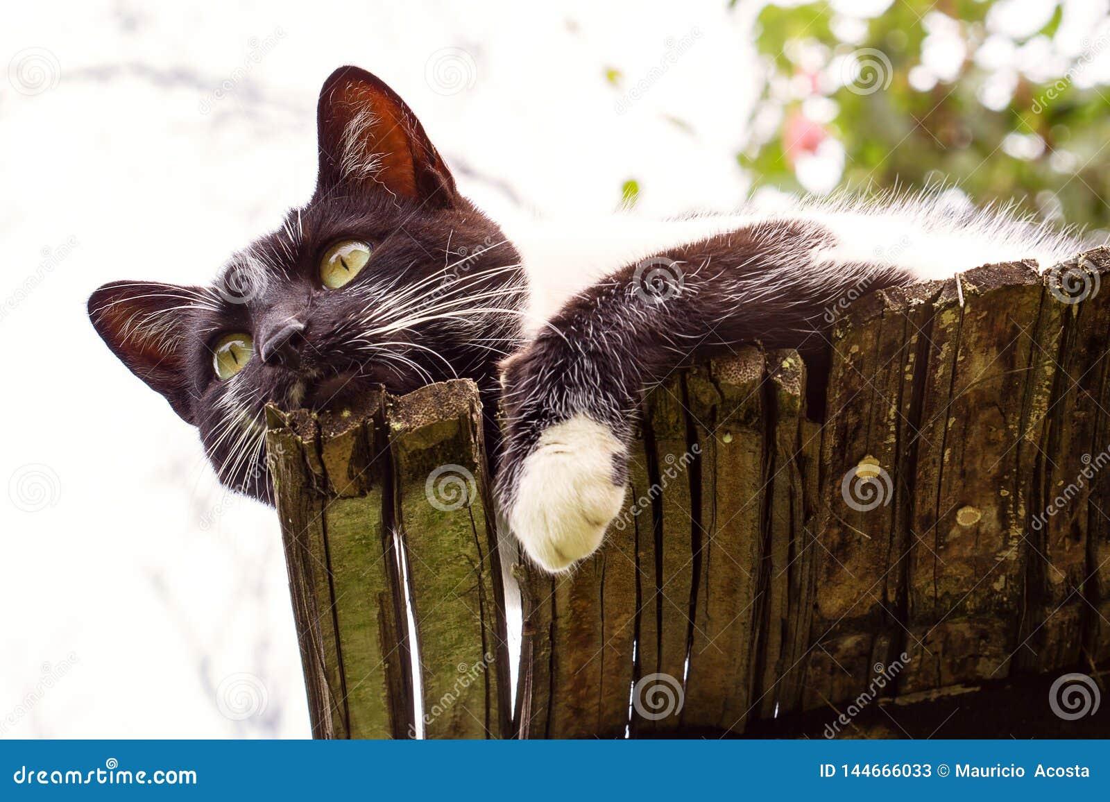 Svartvit katt på ett tak