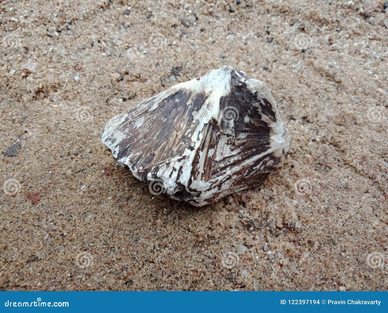 Svartvit sten med textur på sanden texturerad bakgrundstapet, strand hav