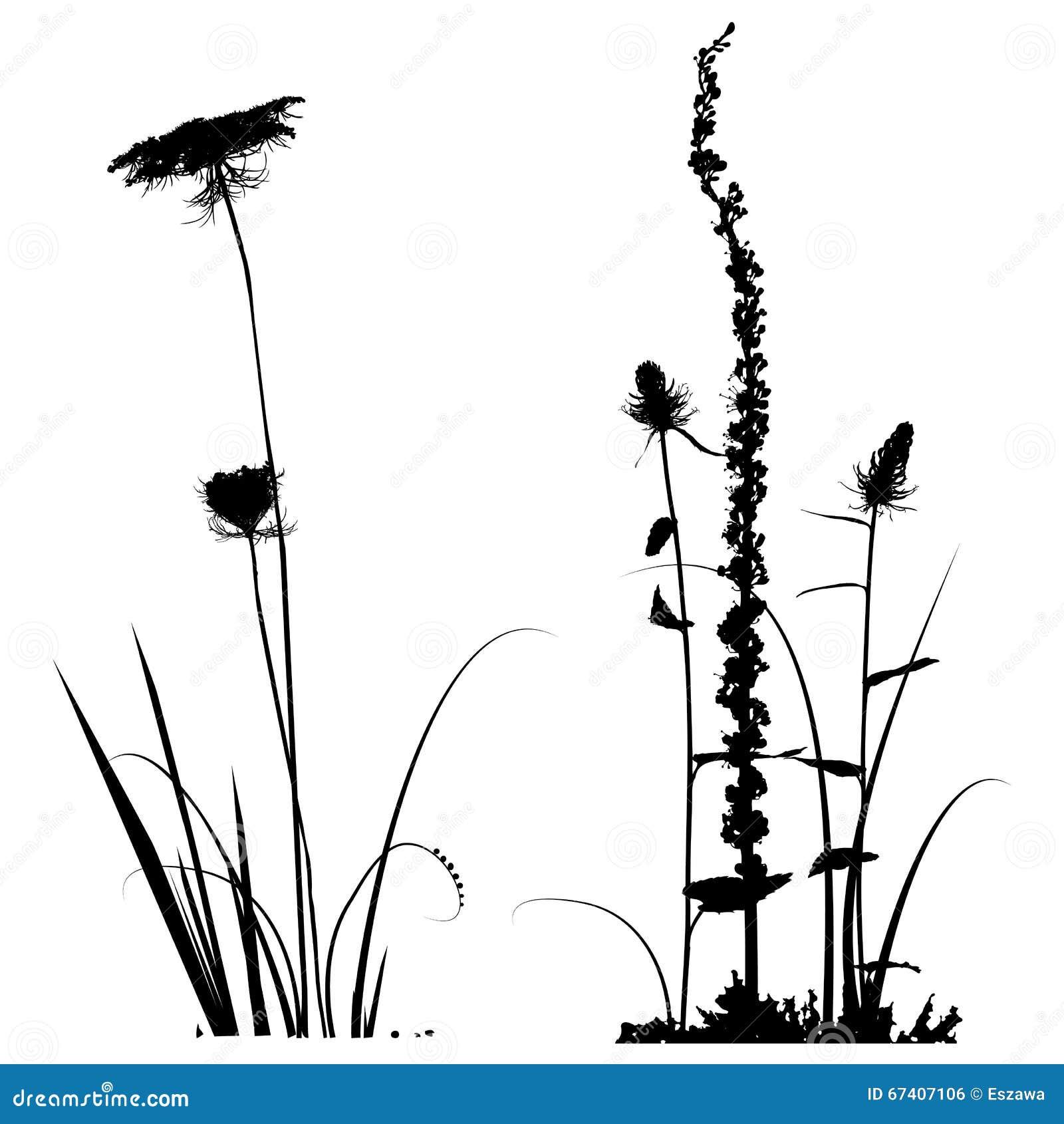 Svartvit växtkontursamling för formgivare
