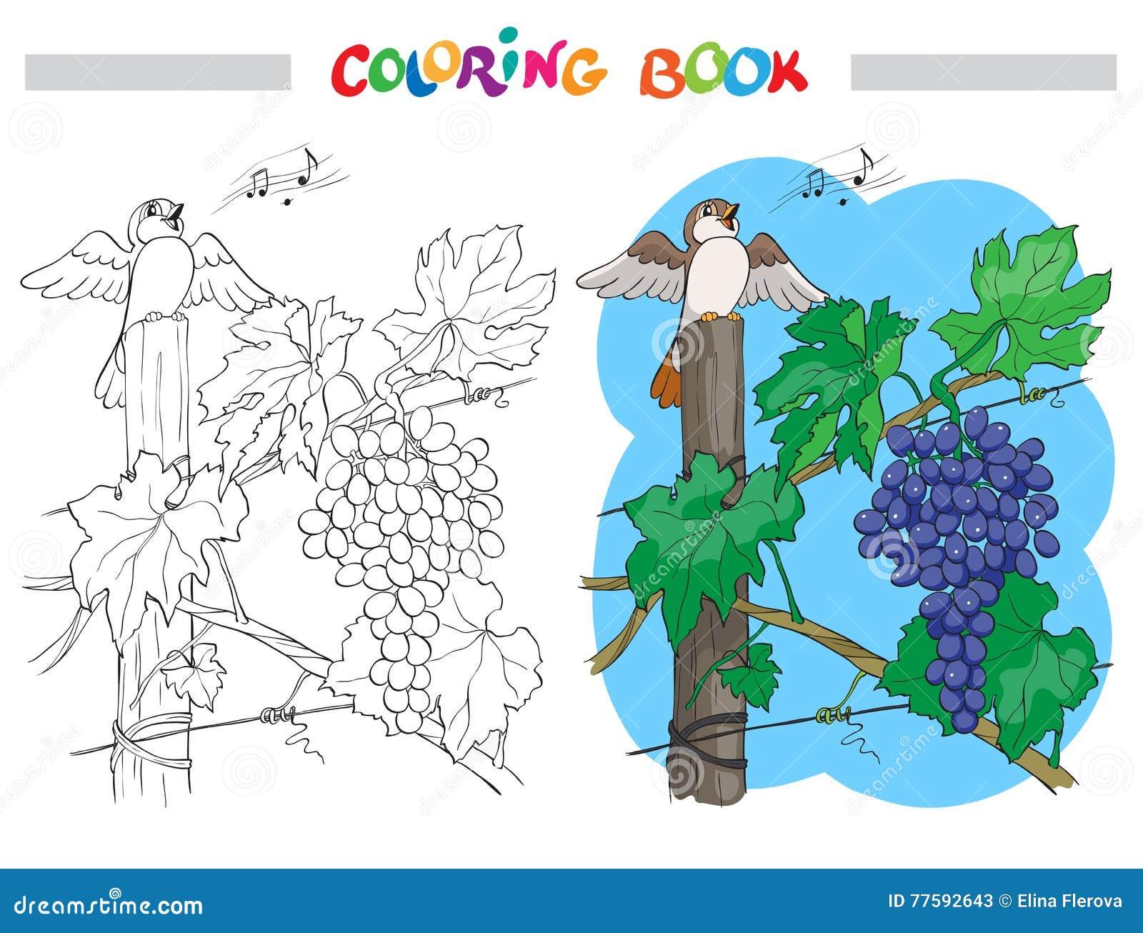 Svartvit vektortecknad filmillustration av gruppen av druvor med fågeln för färgläggningbok