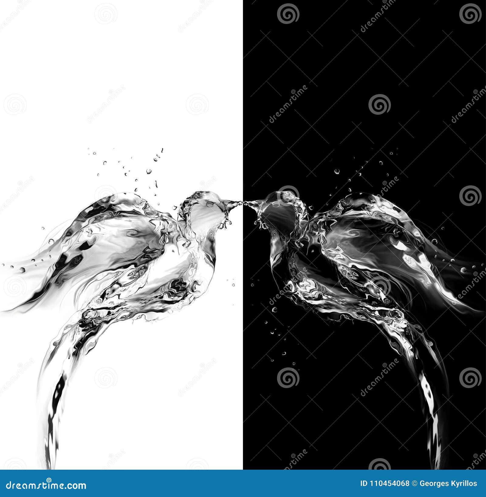 Svartvita vattenfåglar av förälskelse