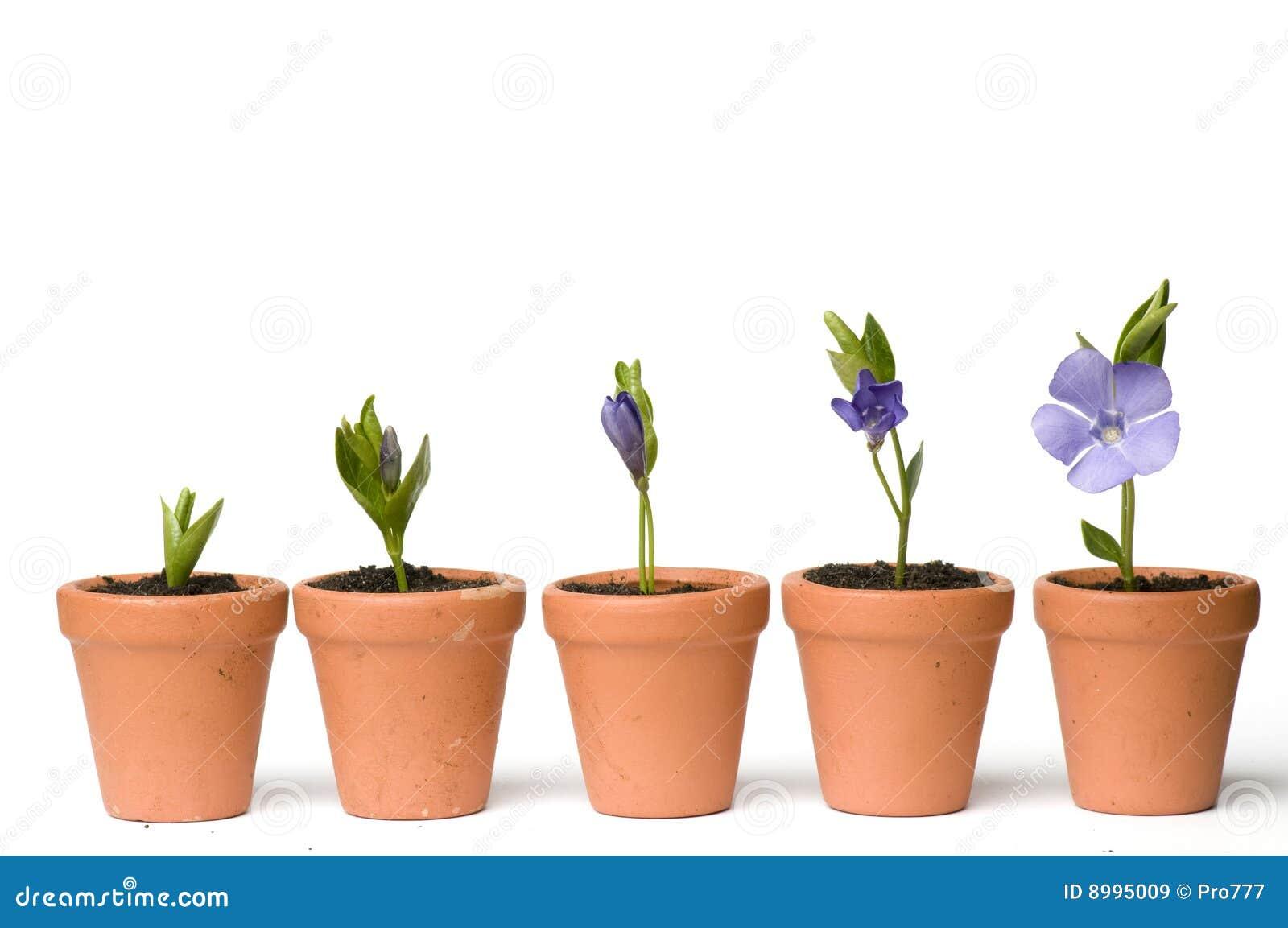 Этап роста цветов фото