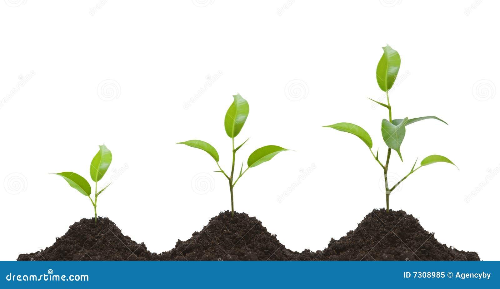 Sviluppo di una pianta giovane