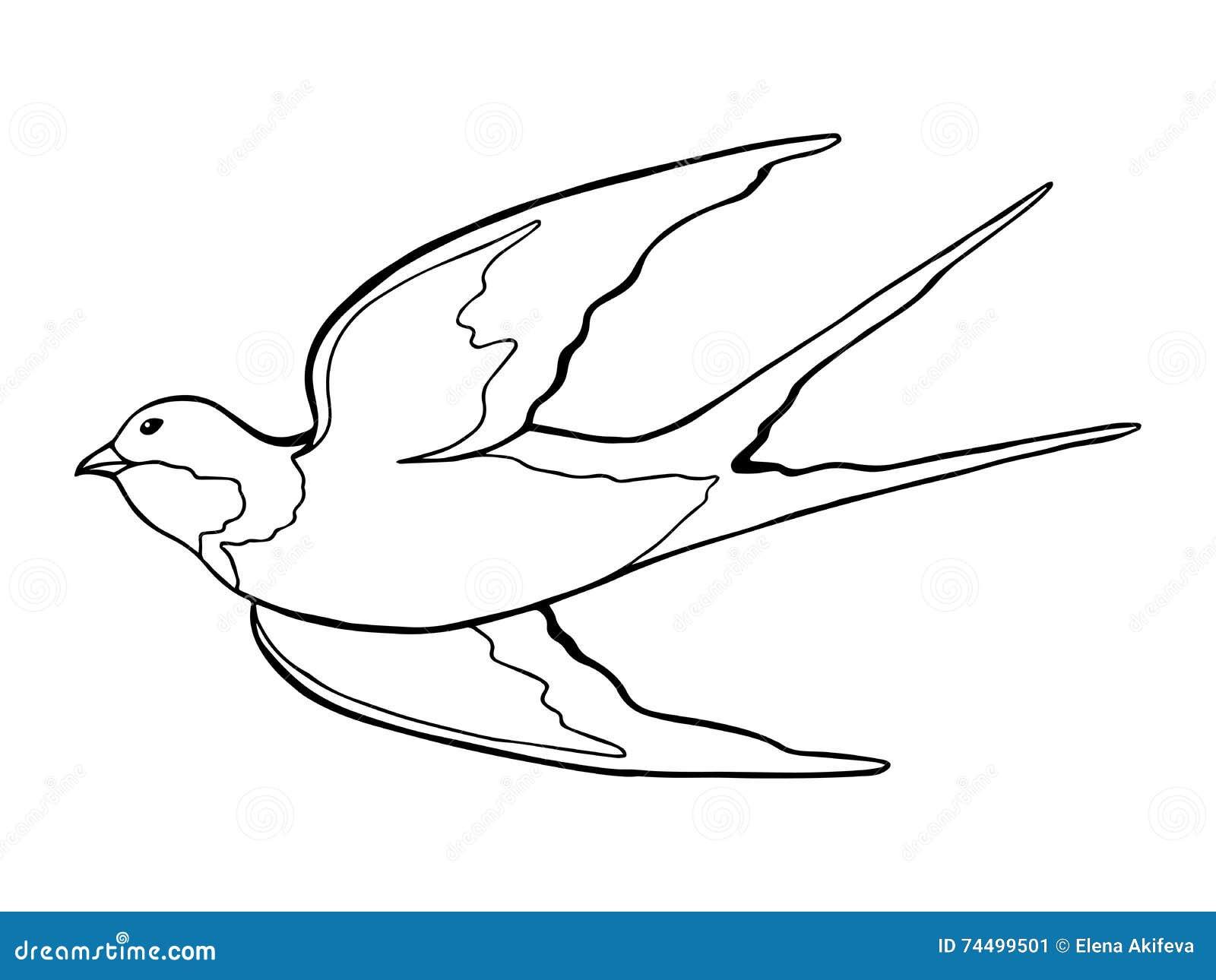 swallow bird black white sketch illustration vector