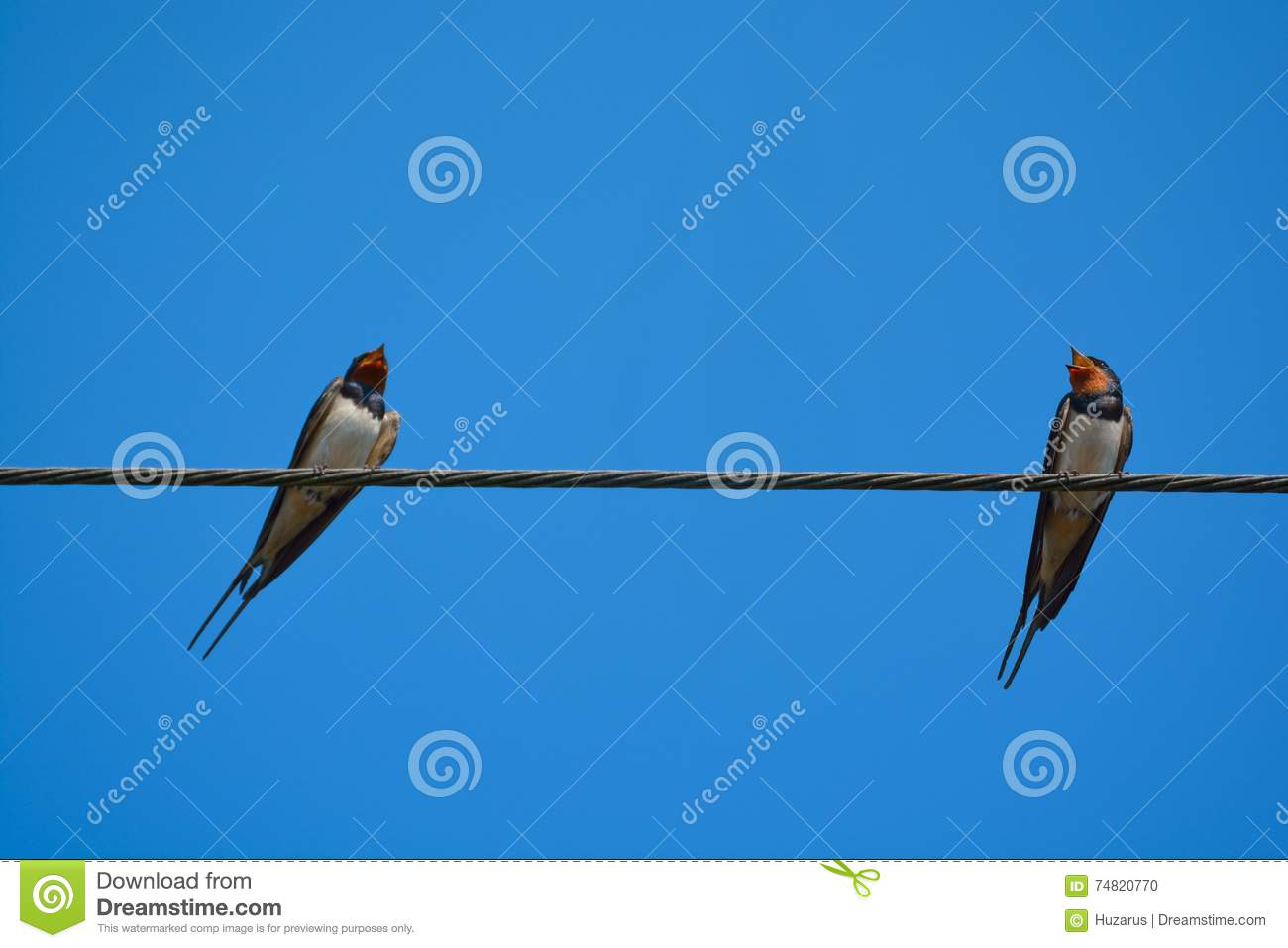 Swallow birds on wire.