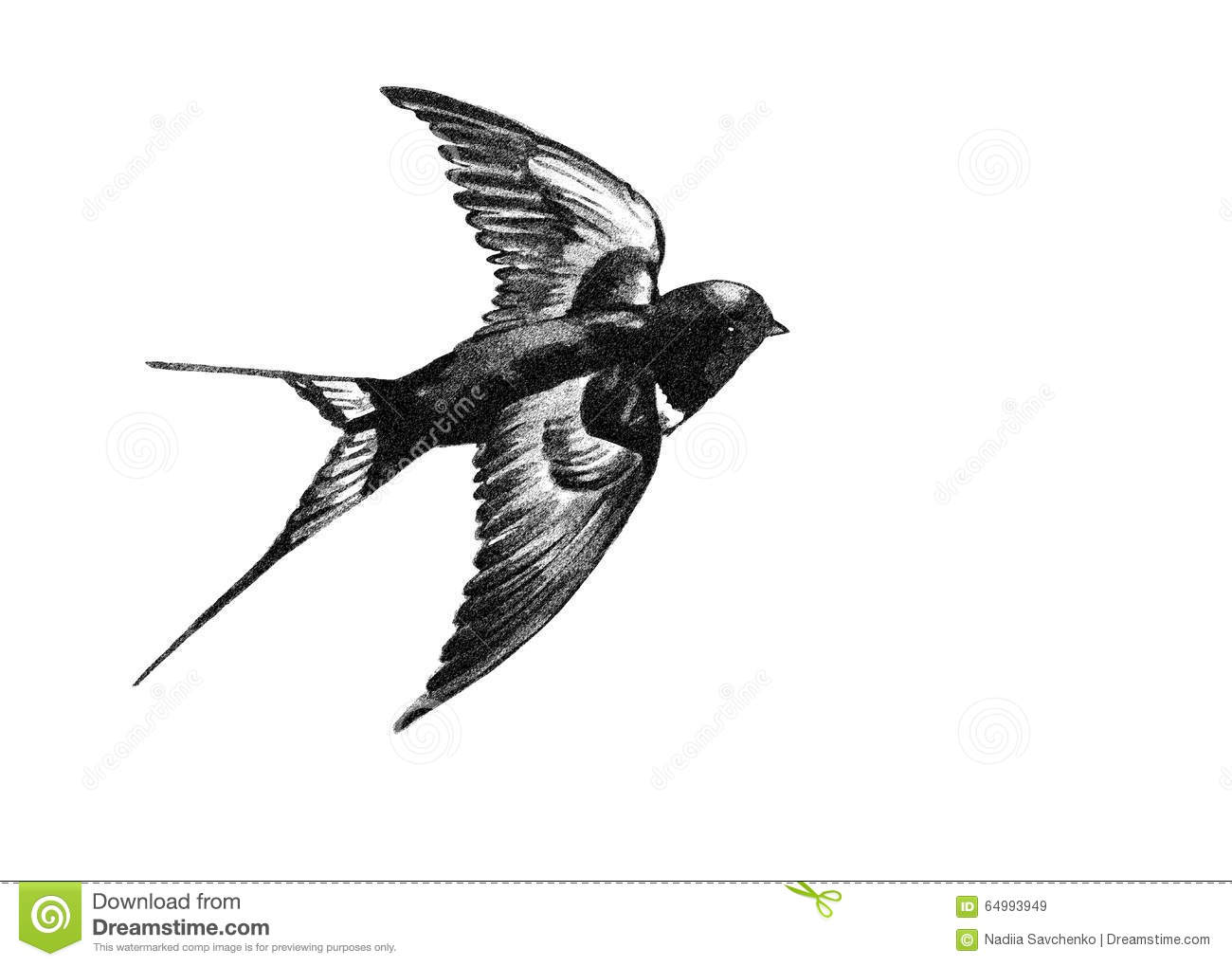 Swallow flying black and white drawing stock vector for Oiseau blanc et noir