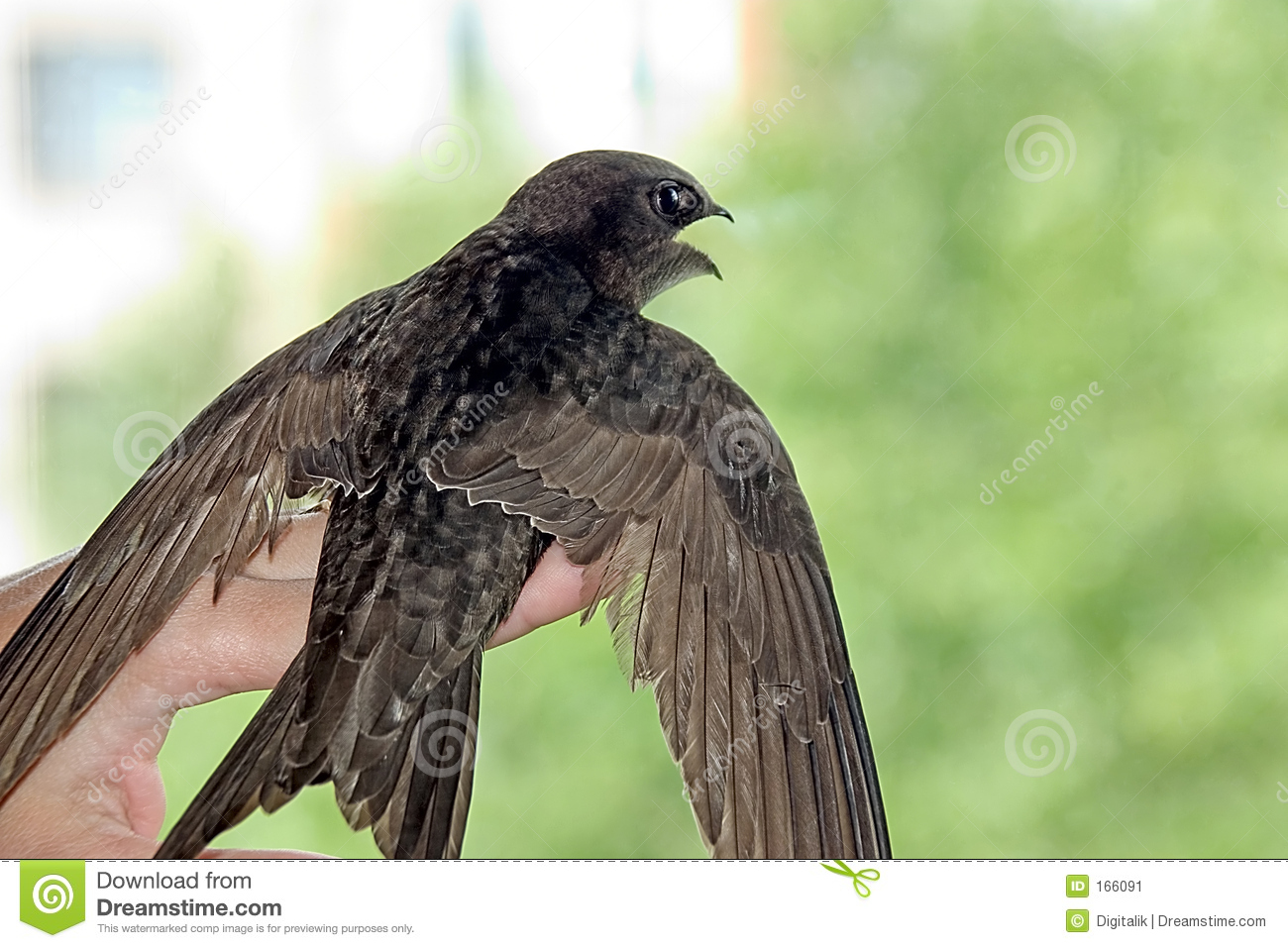 Swallow on hand