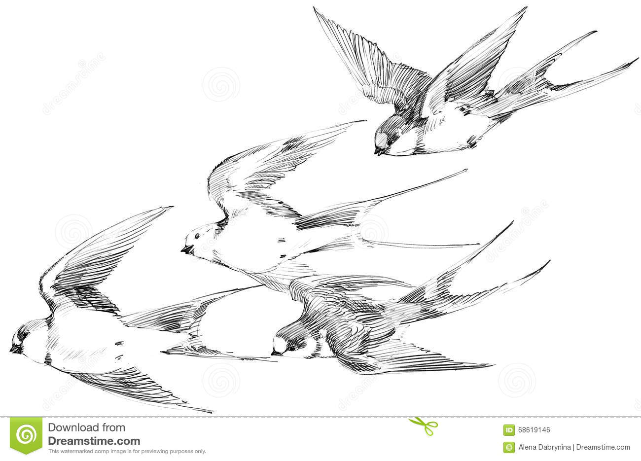 Drawing Lines With Swift : Swallow pencil sketch swift flight hello spring