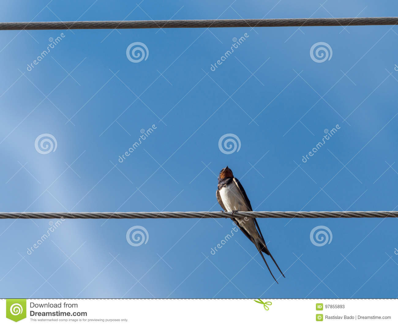 Swallow on the wire 2 stock image. Image of care, place - 97855893