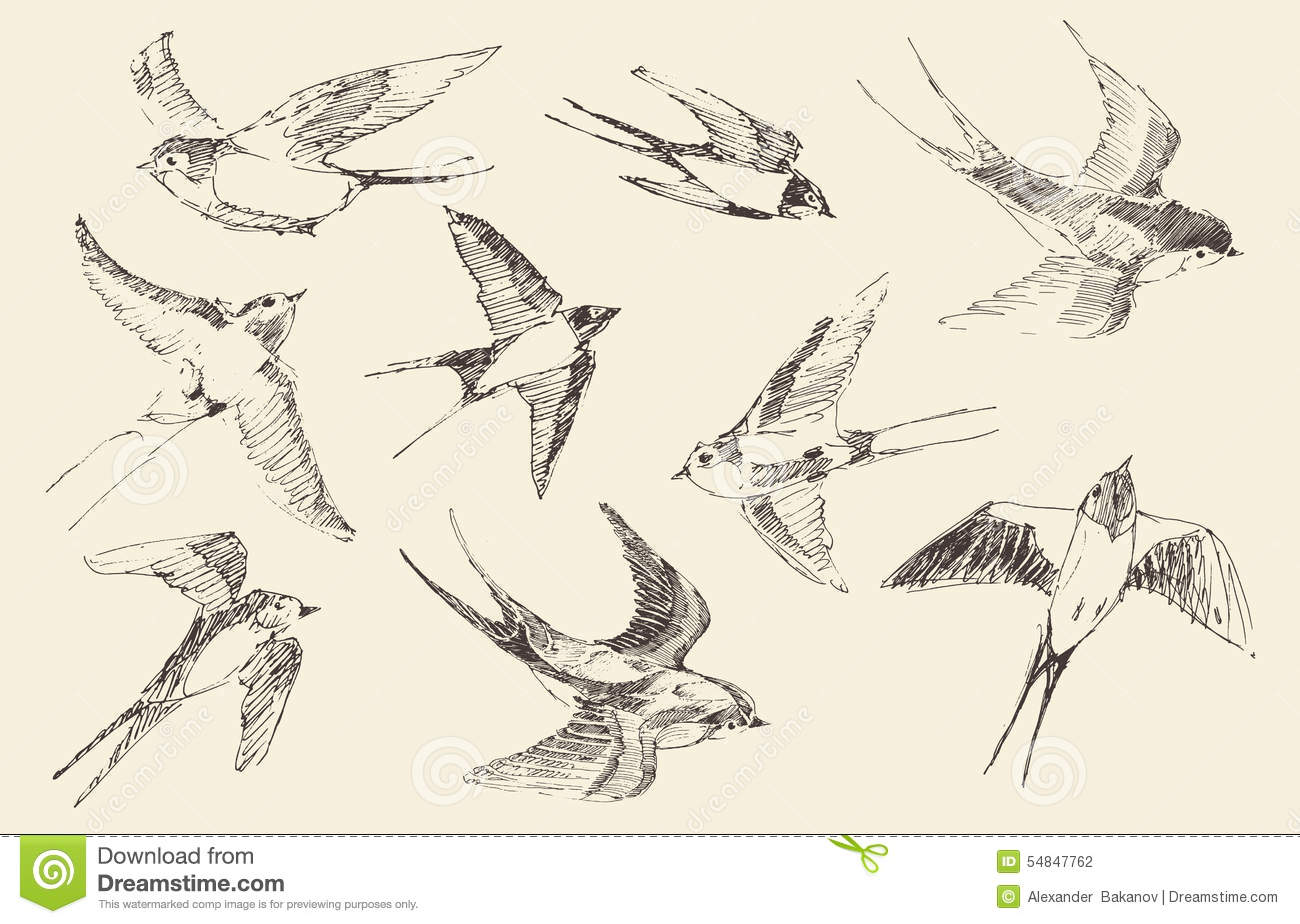Set of sketches of flying swallows stock vector illustration - Royalty Free Vector Bird Drawn Engraved Flying Illustration