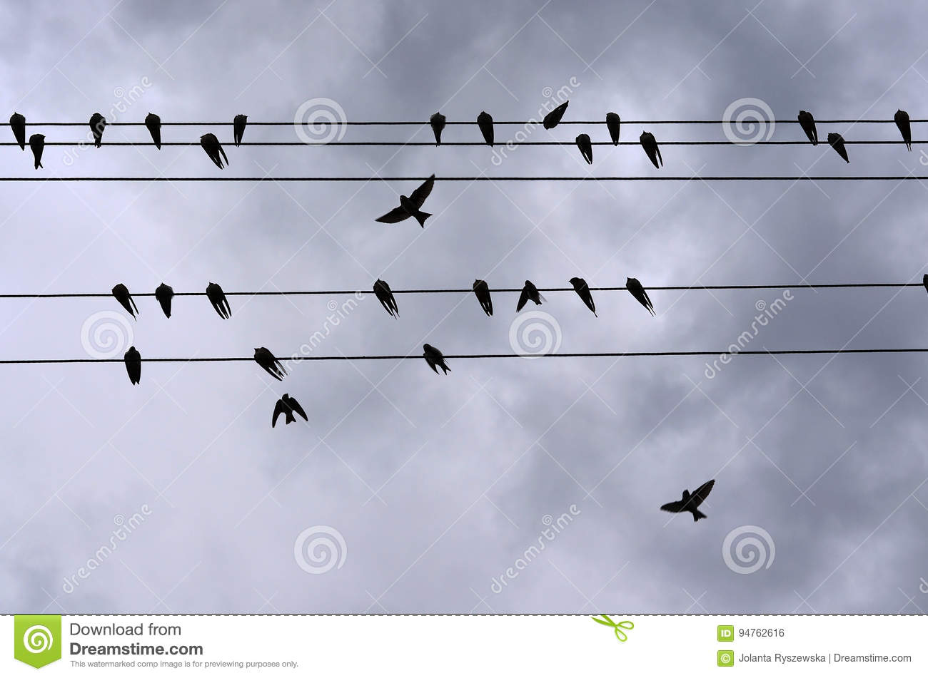 Swallows stock photo  Image of outdoors, high, screens