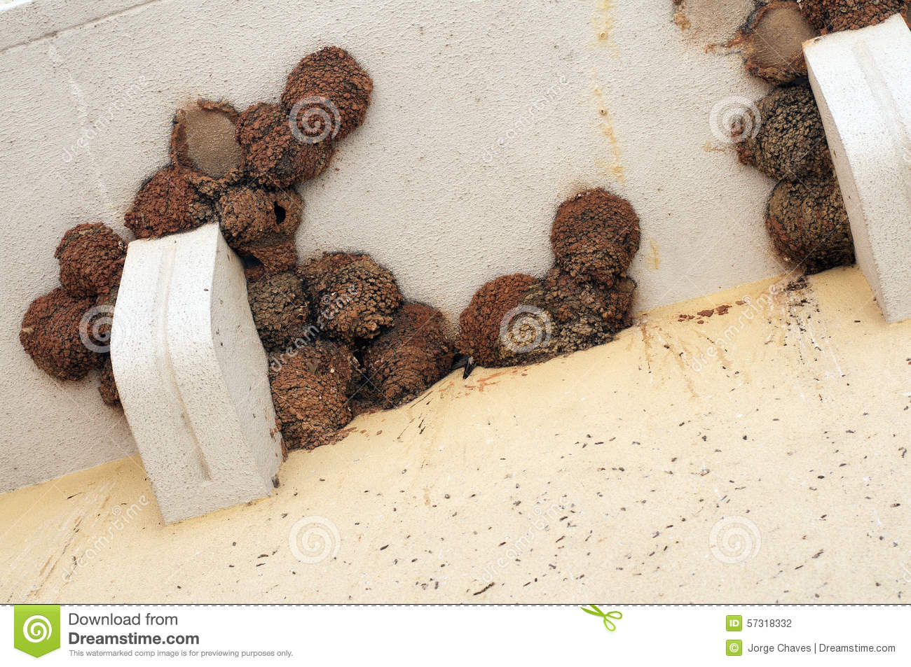 Swallows' Nests Stock Photo - Image: 57318332