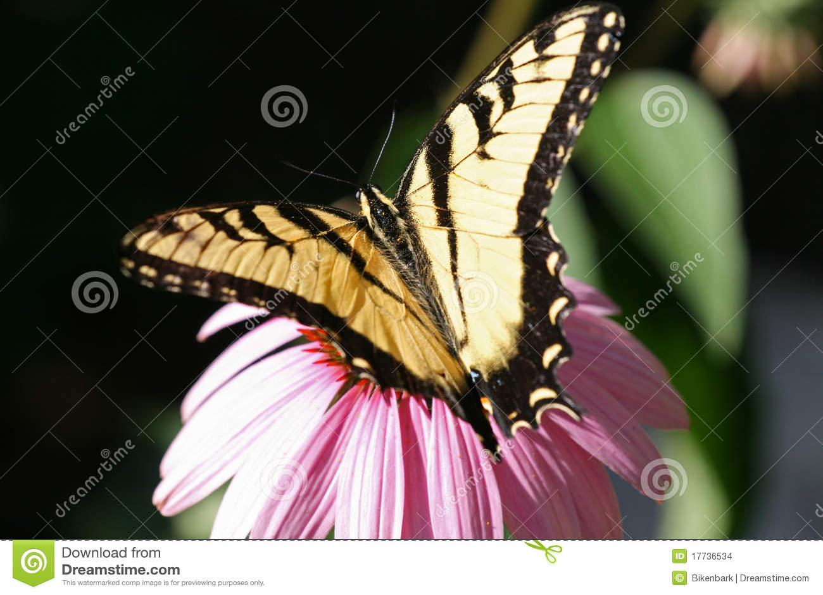 Swallowtail Basisrecheneinheit