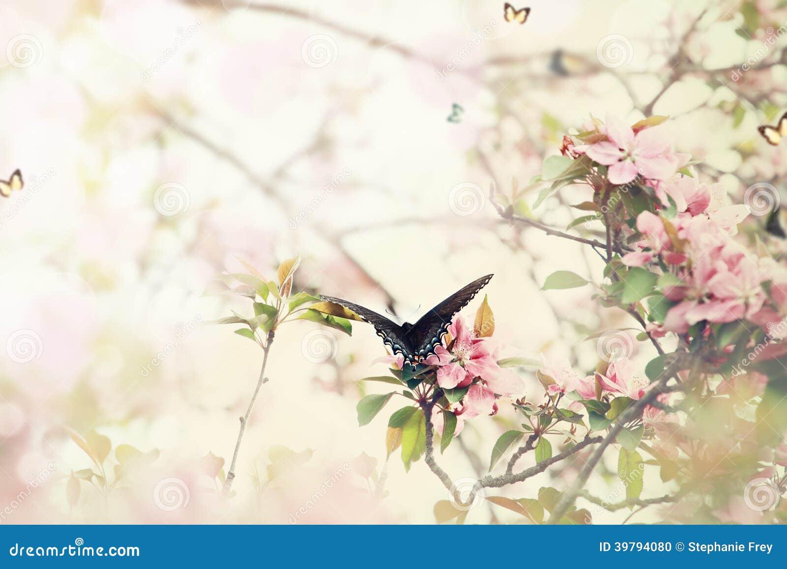 Swallowtail in de Lente
