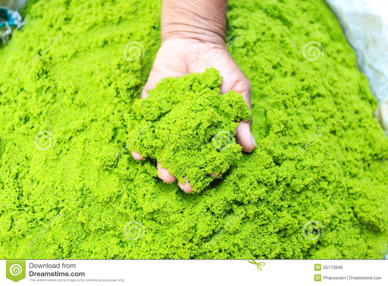 Swamp Algae Or Water Meal In Northeast Of Thailand Stock Photo ...