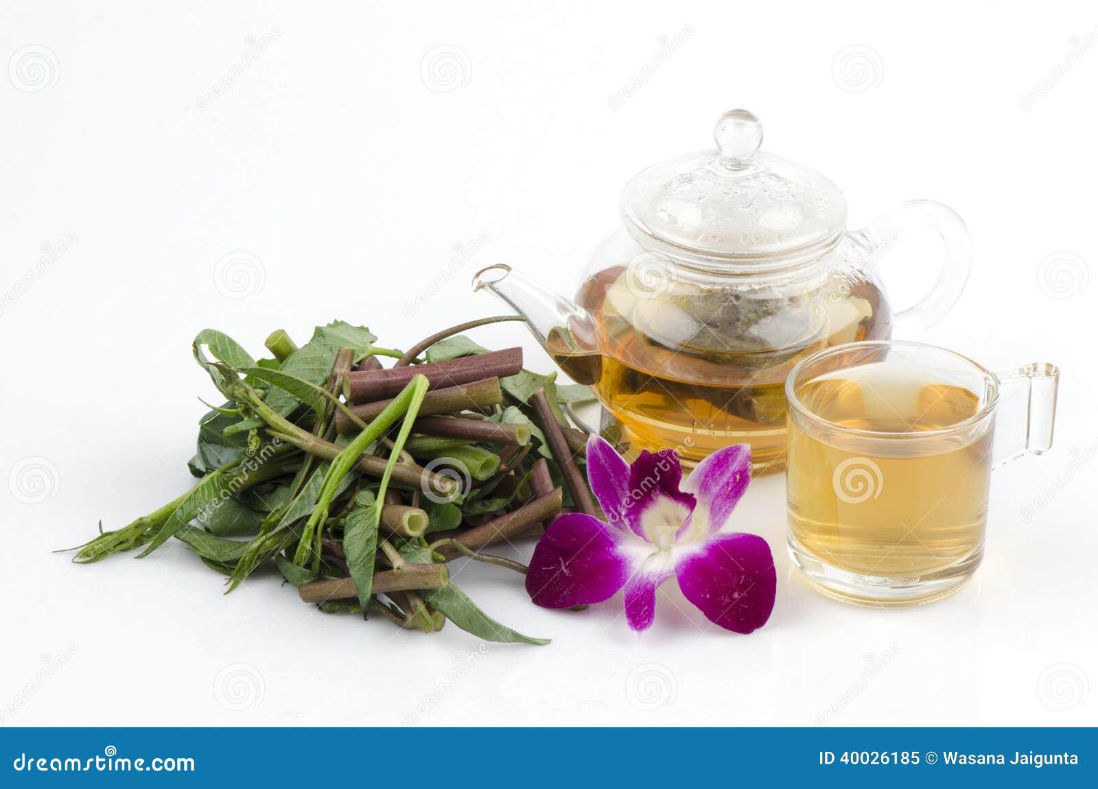 ... morning-glory-ipomoea-aquatica-forsk-tea-tea-tea-tea-heath-40026185