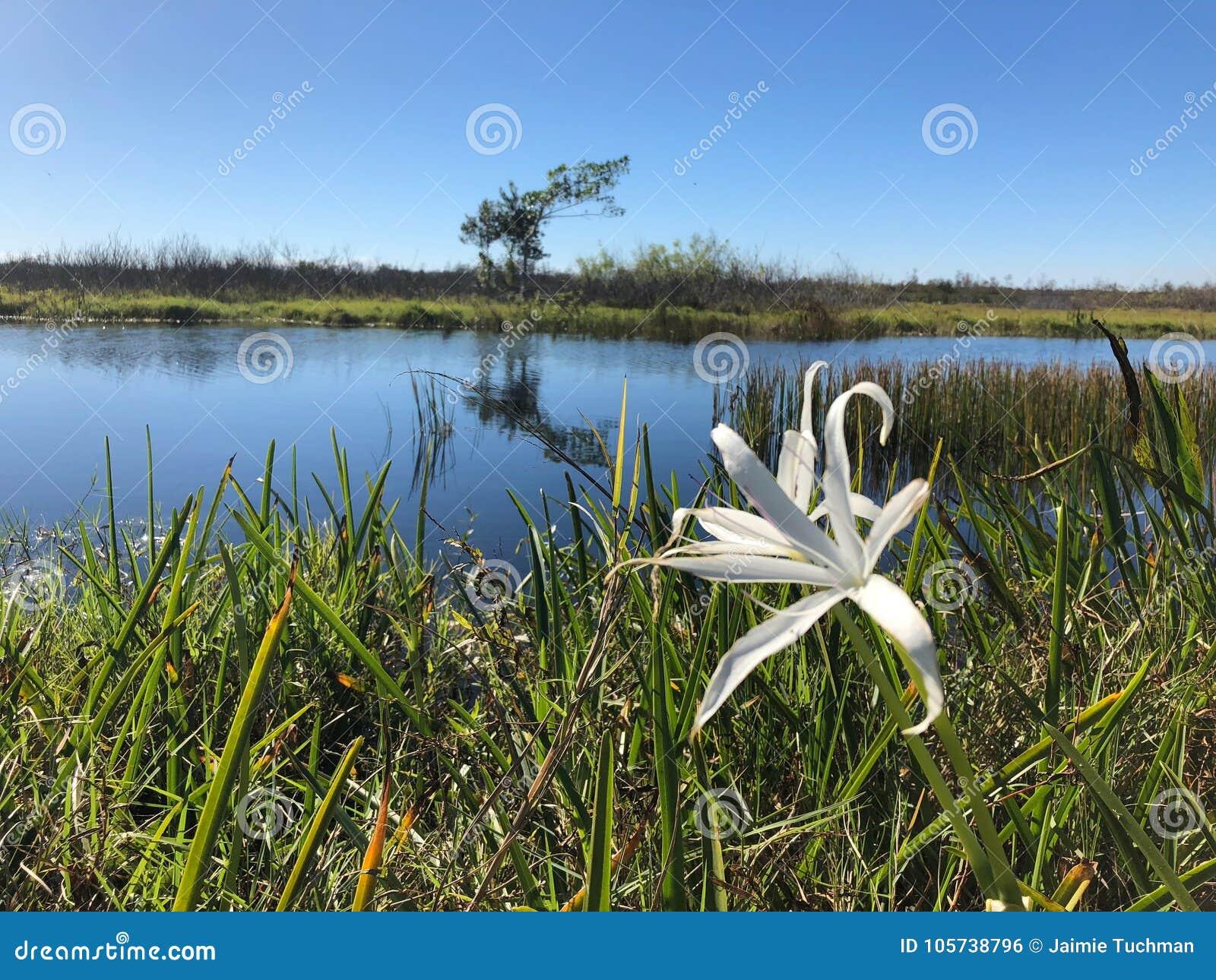 Carolina swamp