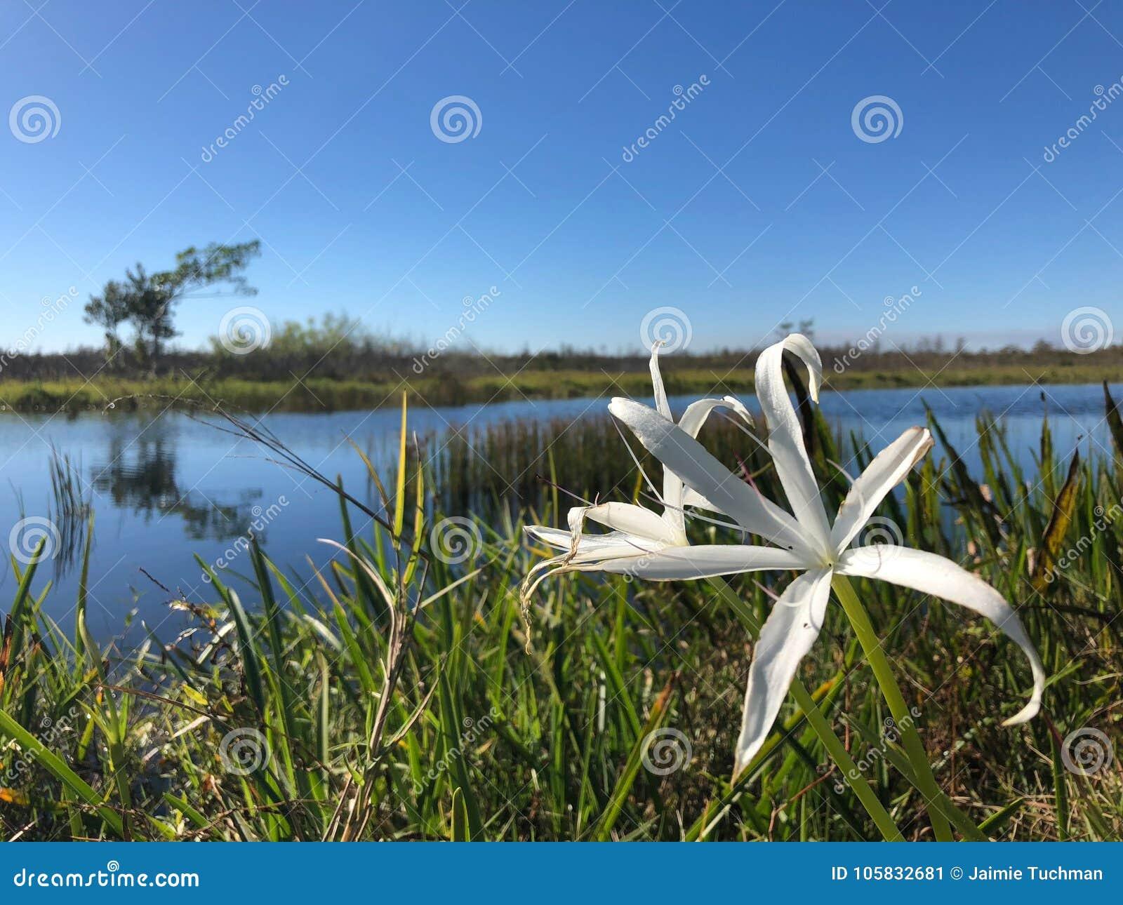 River flowers landscape