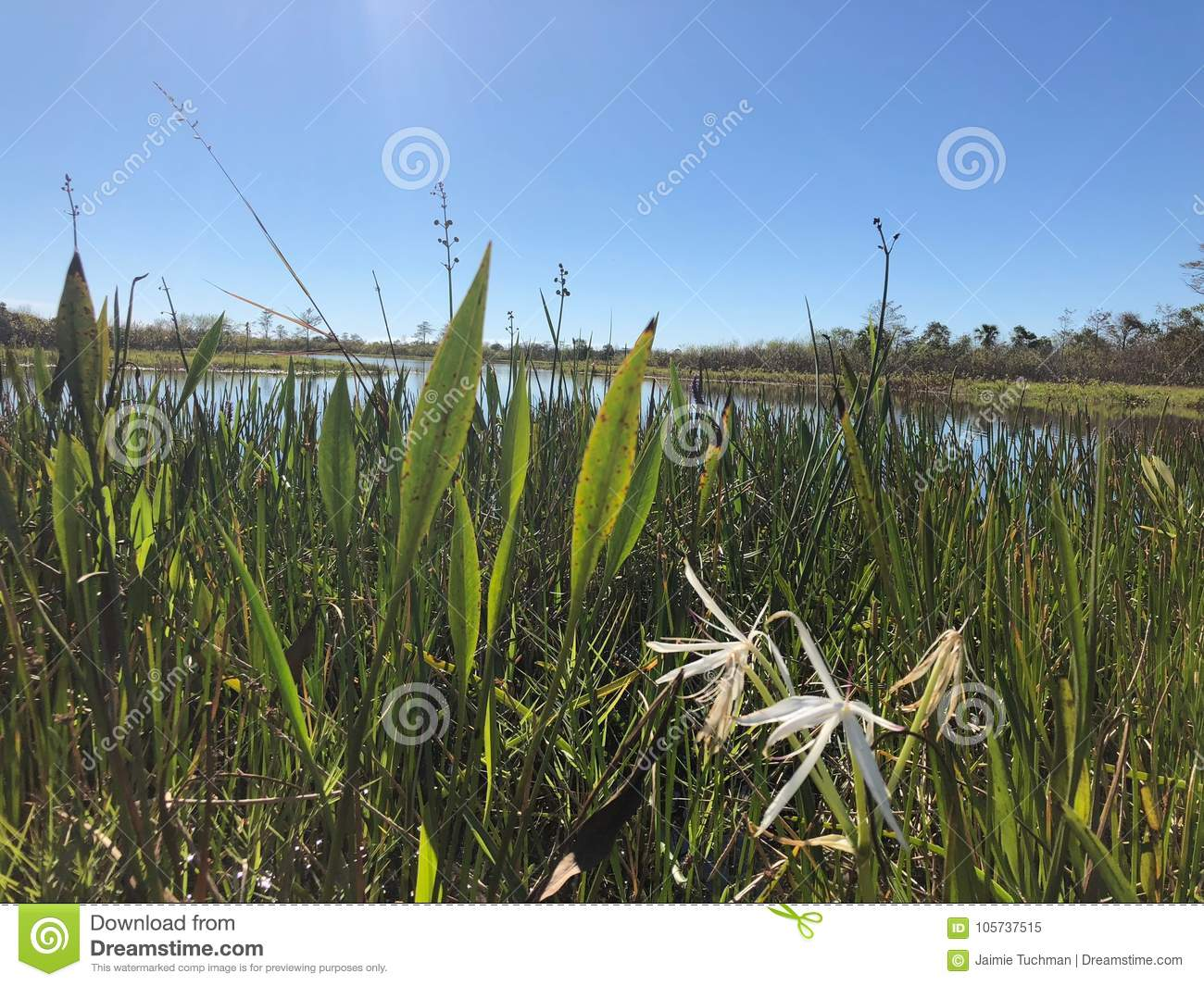 swamp grass and wildflowers in the marsh