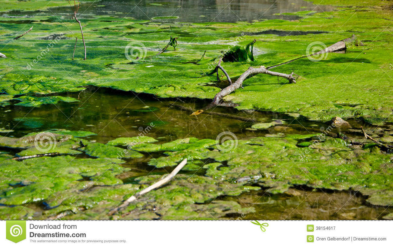 Swamp royalty free stock photography image 38154617 for Green water in pond