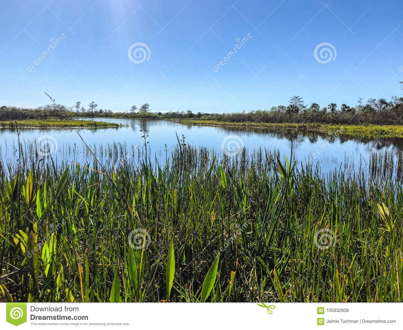swamp river landscape