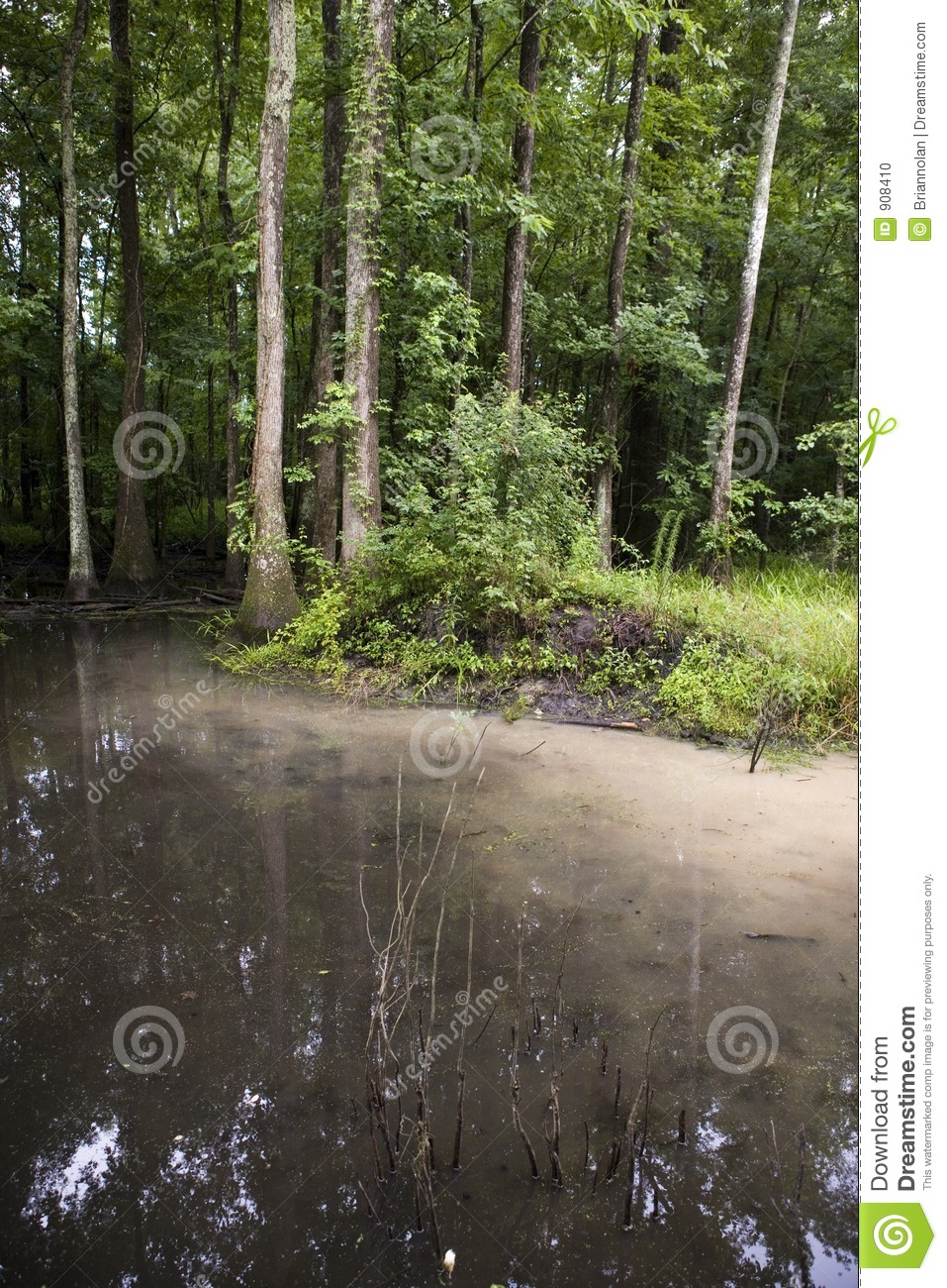 Swamp with soil runoff