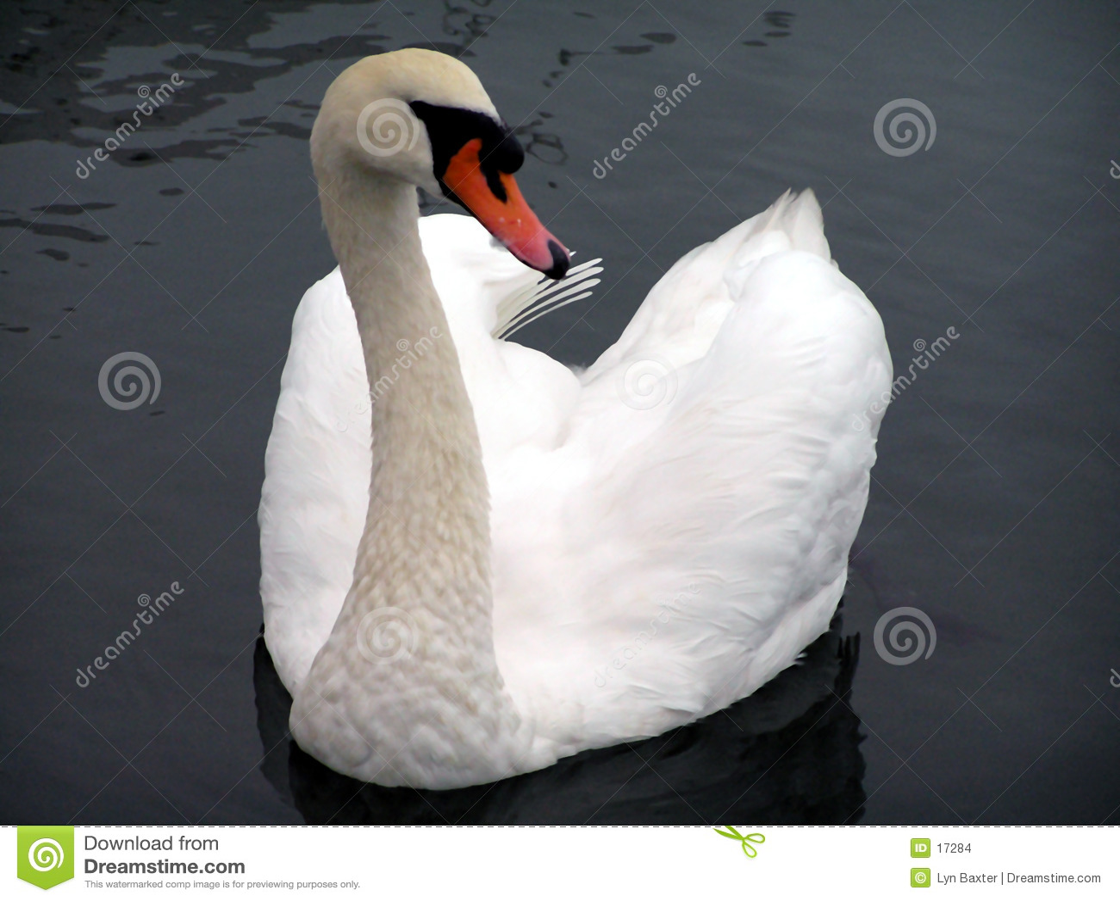 Swan of Avon
