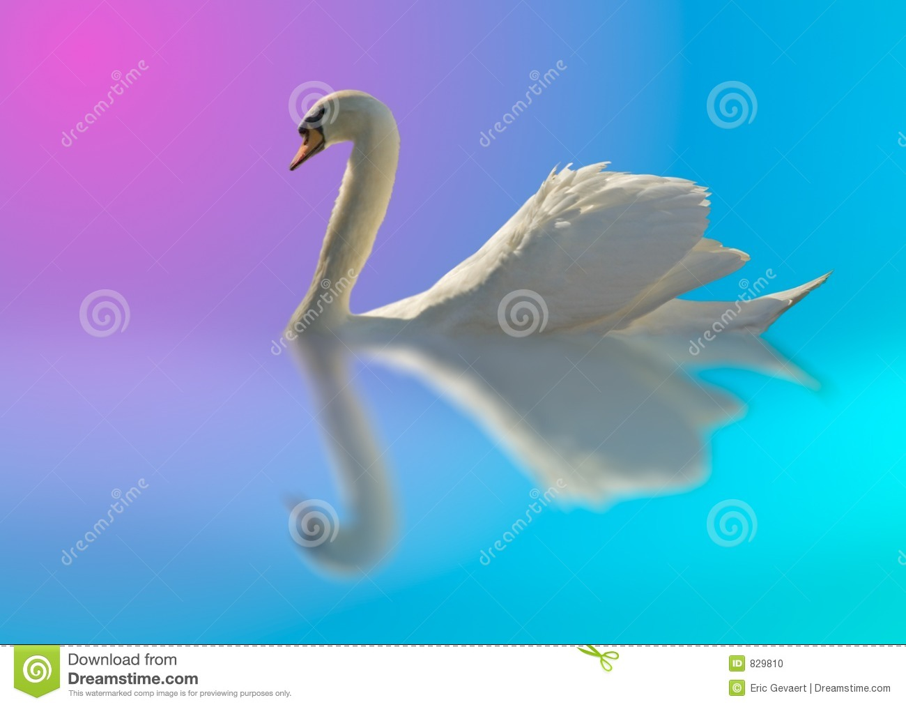 Swan in bright colors