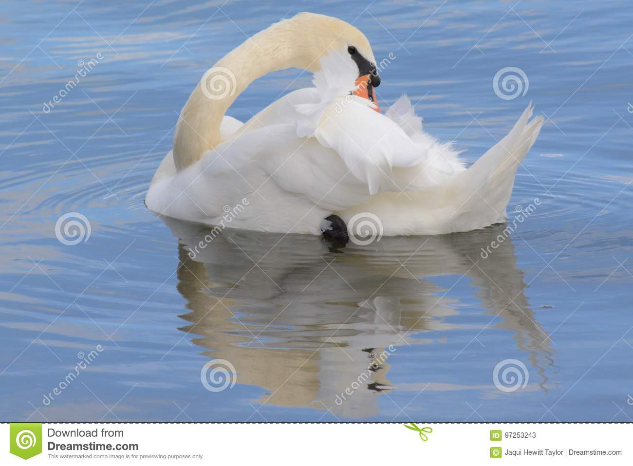 A swan in the centre of a water circle