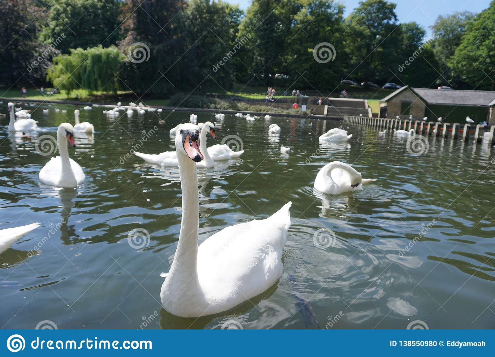 The Swan Eat-As-Much-As You Can Party.