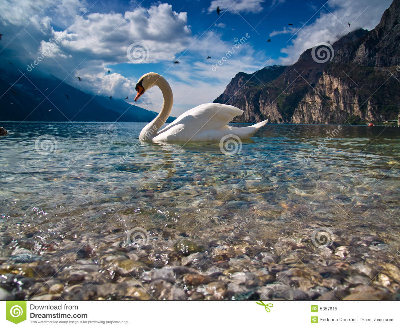 The swan and his lake
