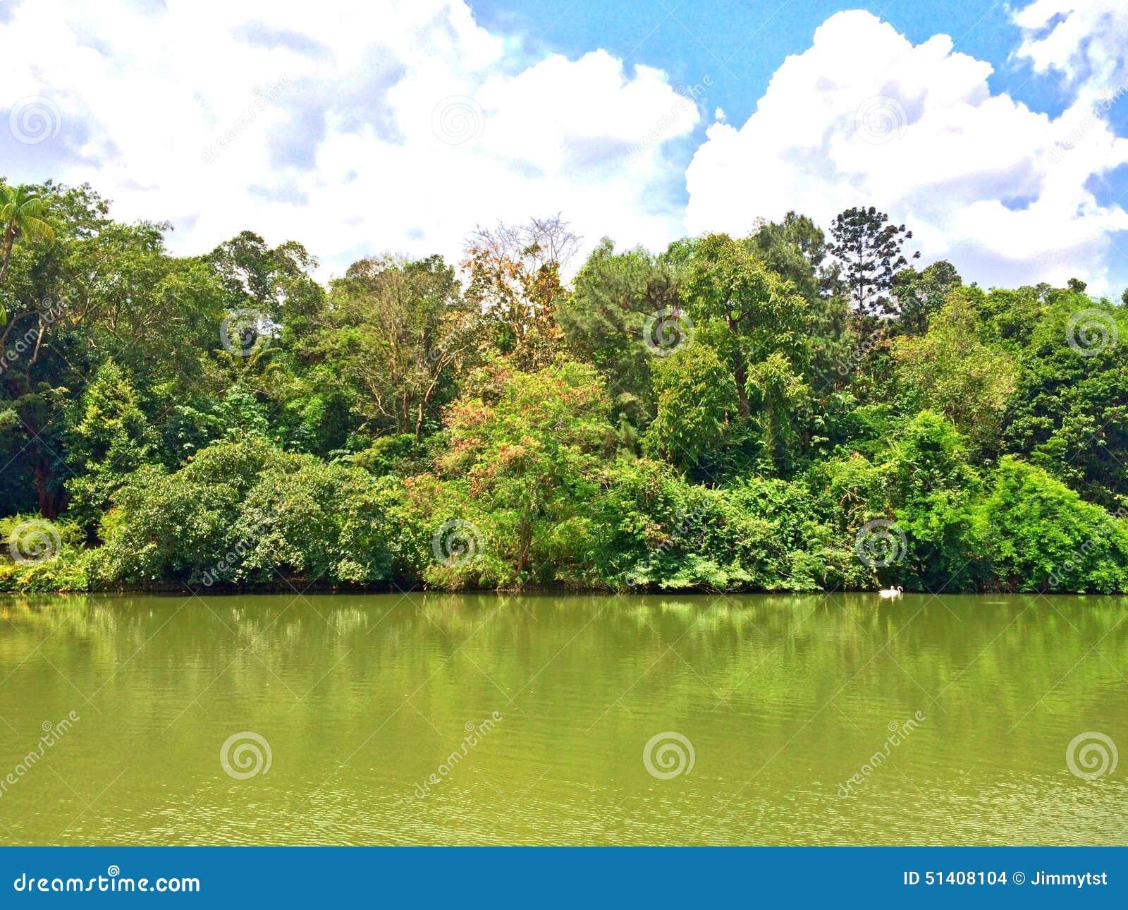 Swan Lake In Singapore Botanic Gardens Royalty Free Stock