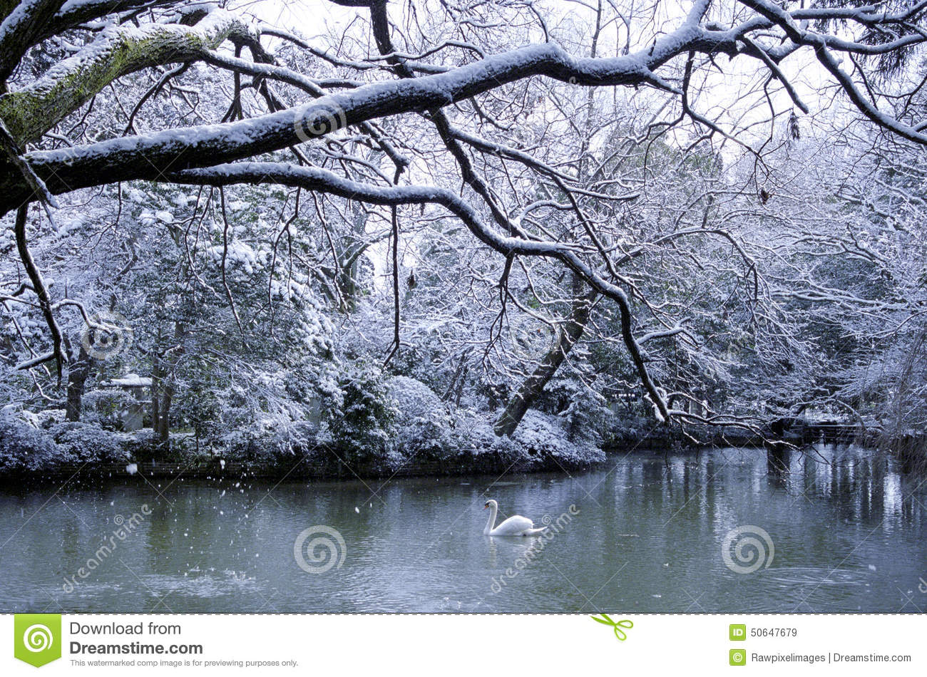 Swan Lake Season Snowing Landscape Concept