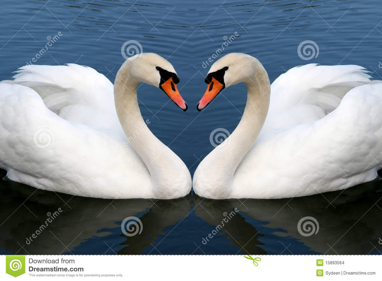 Swan In Love Stock Images - Image: 15893564