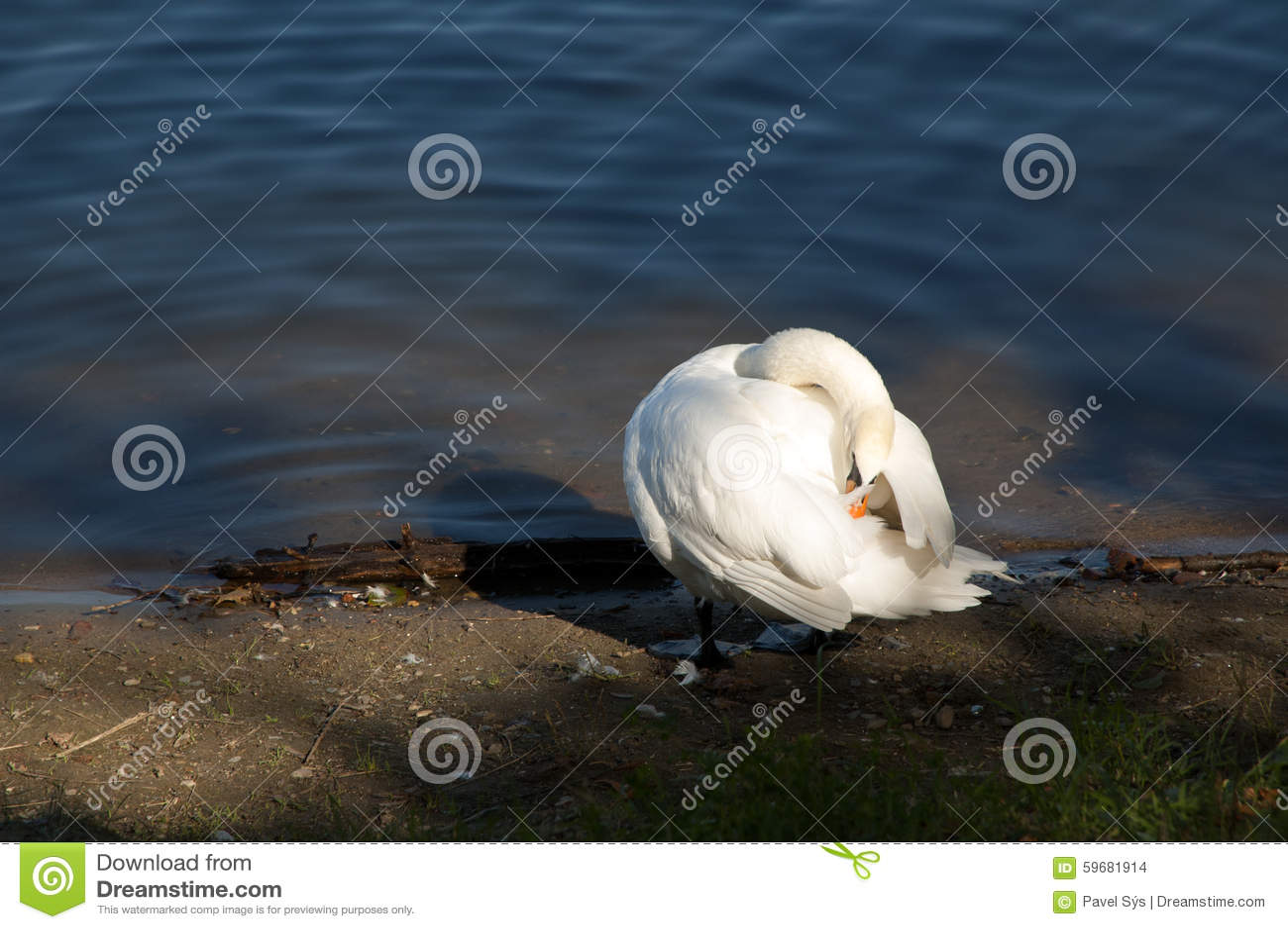 singles in swan river Swan river (suba sa awstralya, state of western australia) swan river (suba sa awstralya, state of tasmania) canada.