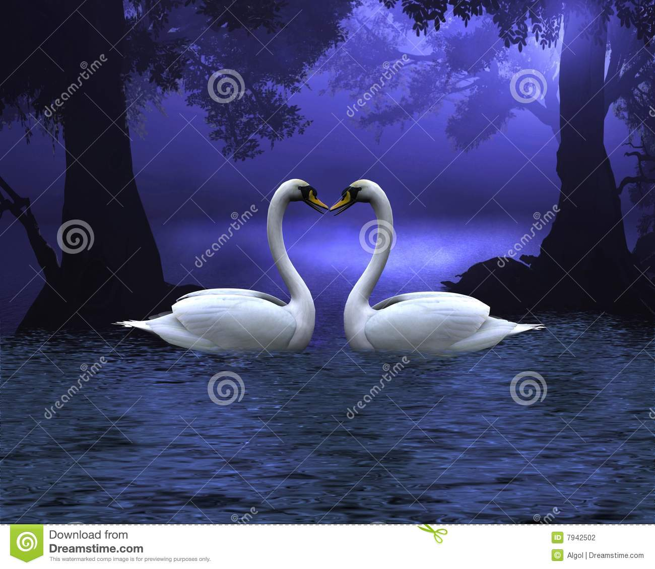 Zebra Wallpaper For Bedrooms Two Swans Making A Heart In The Sunset
