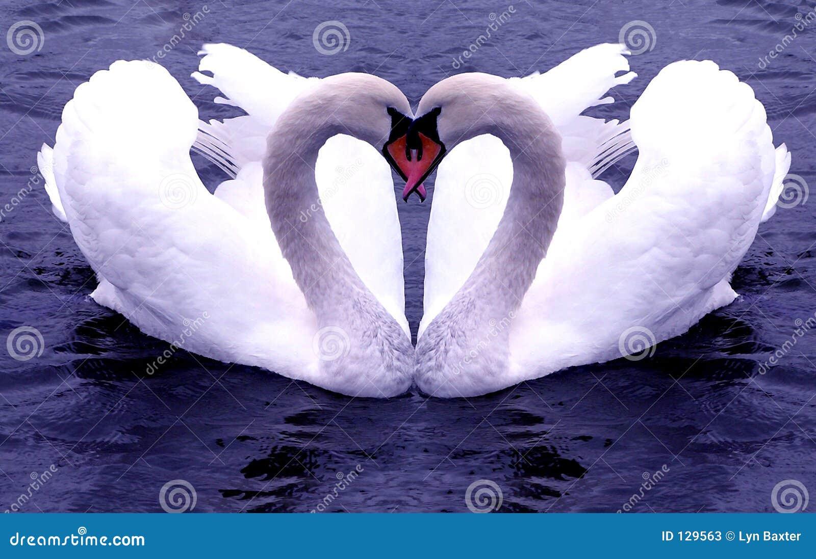 Swan serc