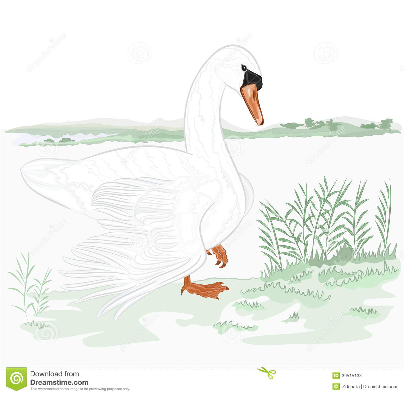 Swan on the shore of lake
