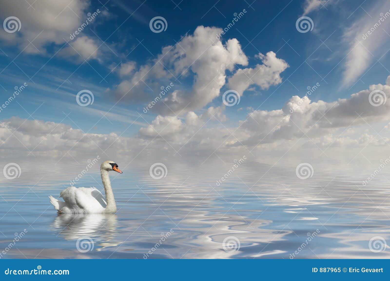 Swan spokojną wodę