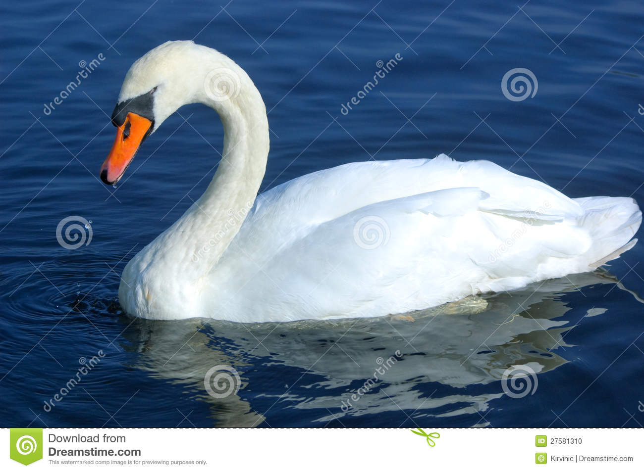 swan swimming in water stock photo image 27581310 otter clipart images otter clip art free images