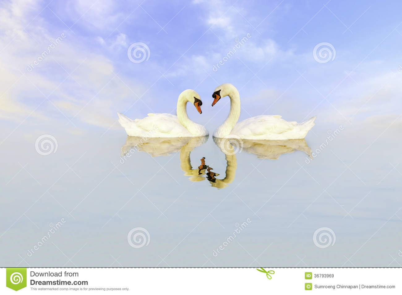 Swans In Love Royalty ...