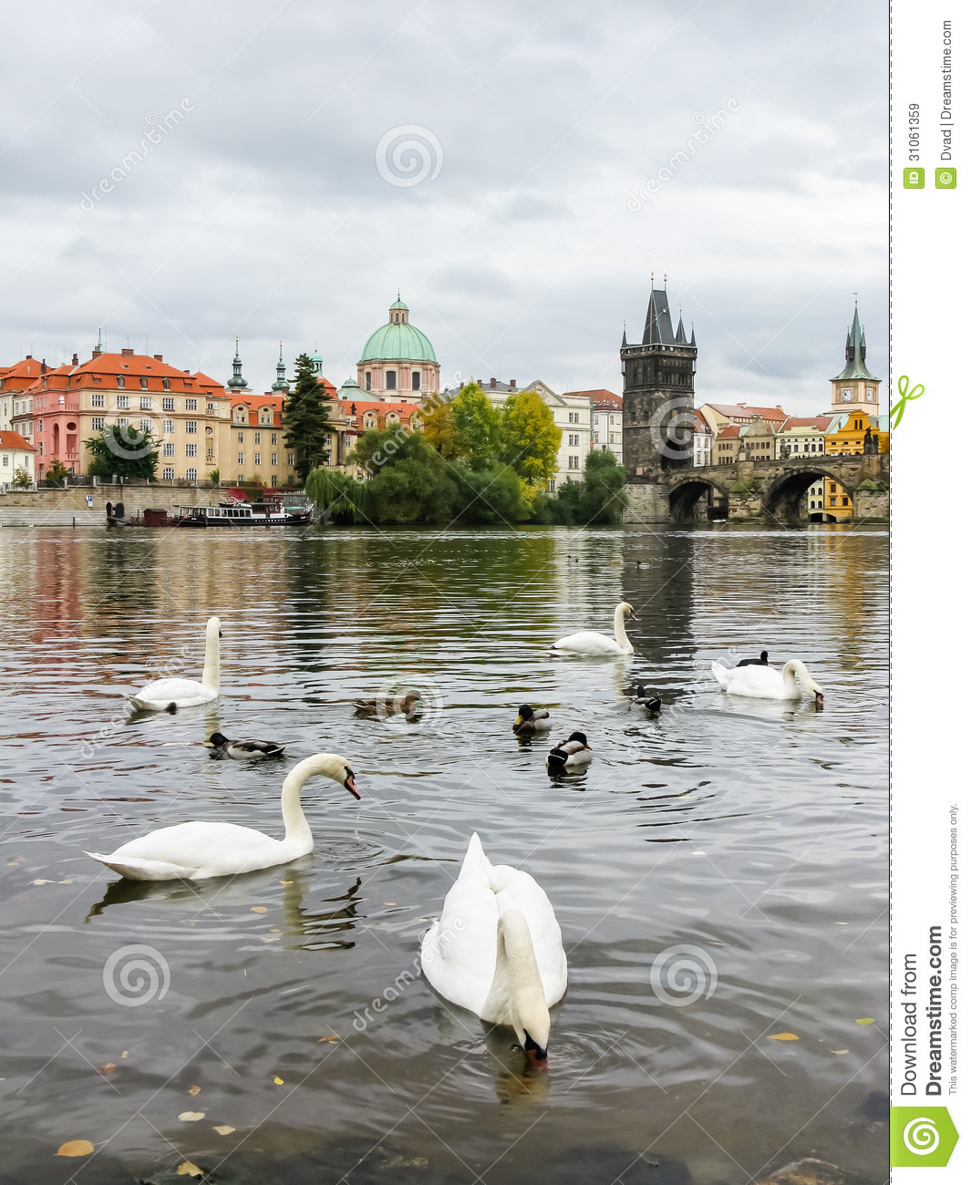 Swans near charles bridge in prague royalty free stock for Where is prague near