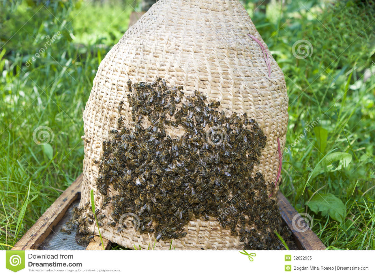 Swarm of bees and hive wicker basket royalty free stock photo image 32622935 - Wicker beehive basket ...