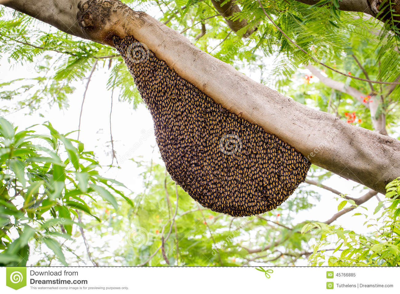 swarm of honey bees clinging to a tree.