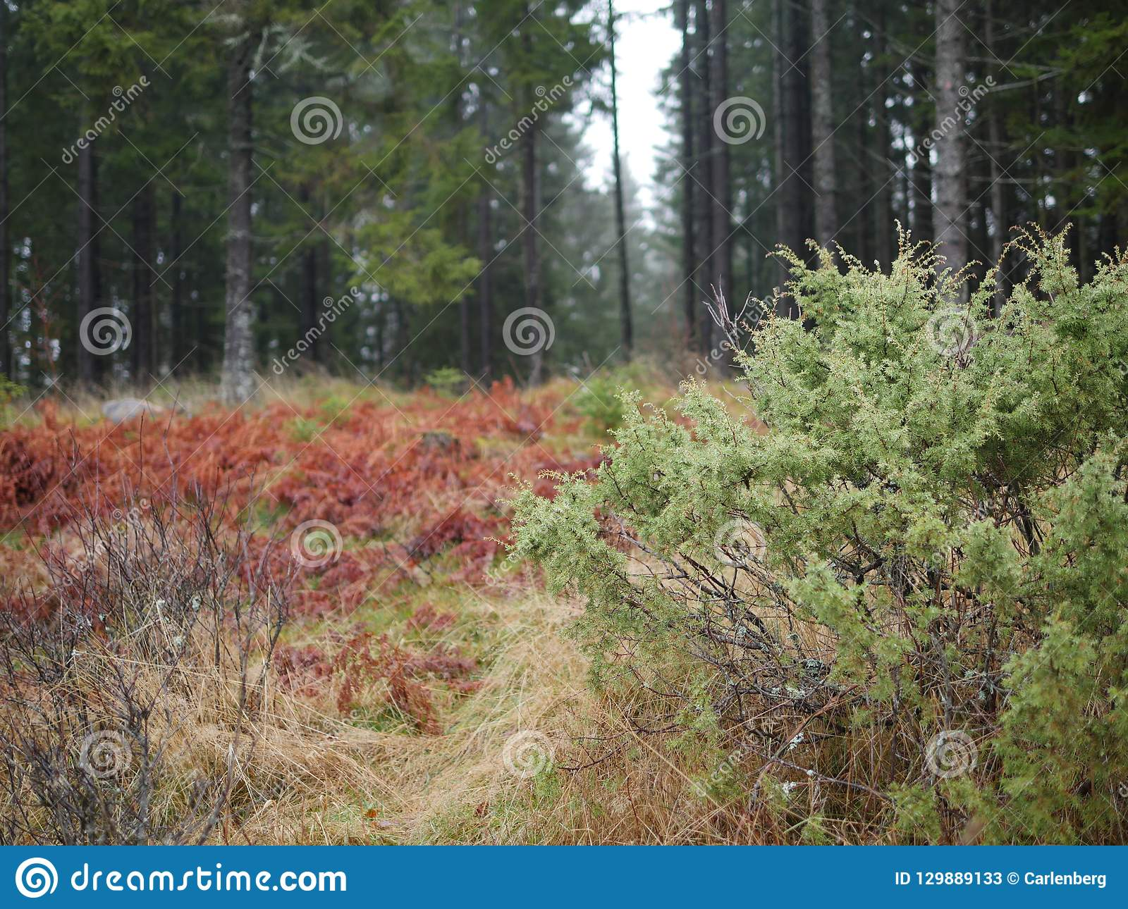 Swedish landscape in the autumn in the forest