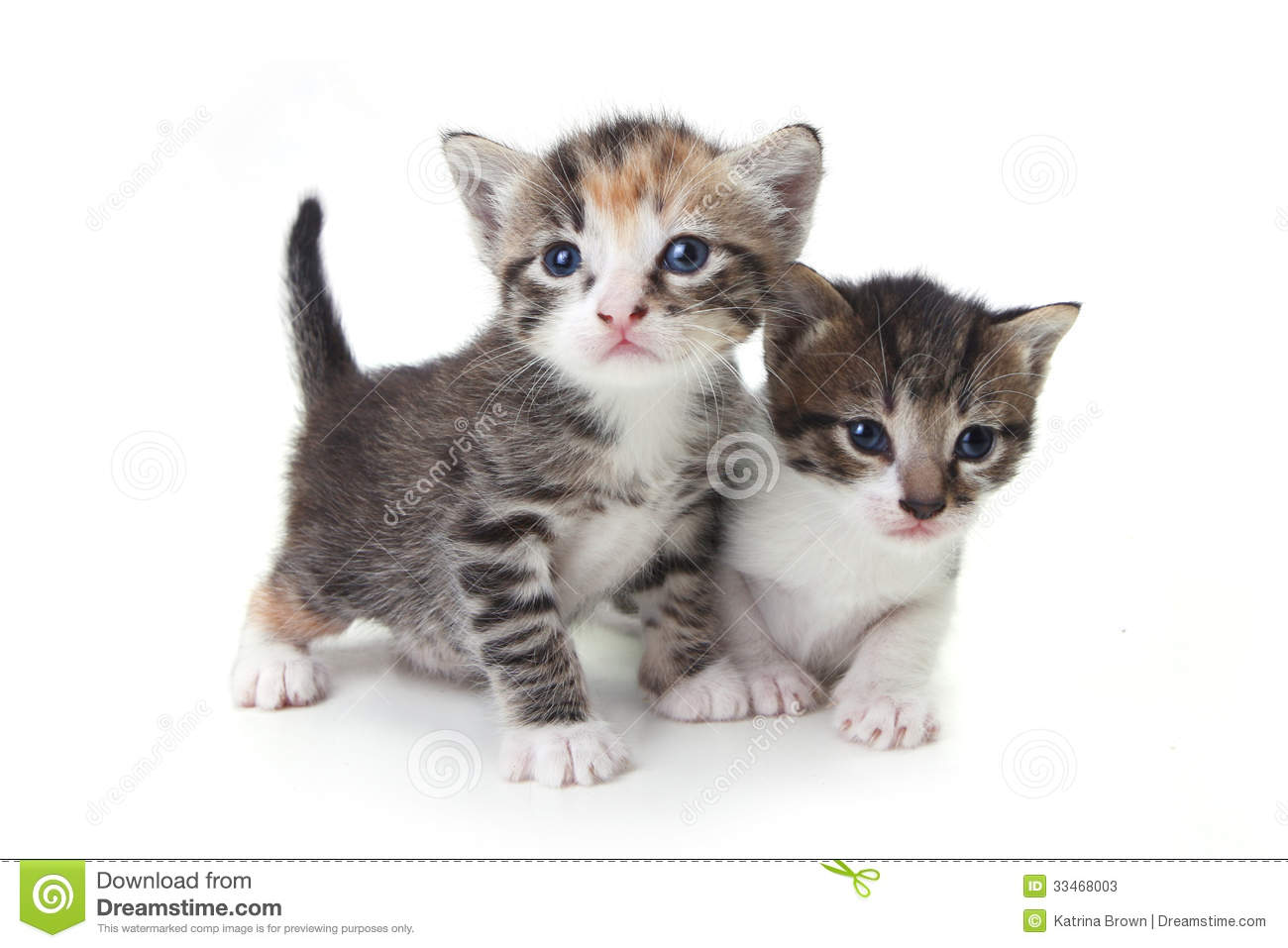 Sweet Adorable Baby Kittens Exploring Their Space Stock Photos - Image ...