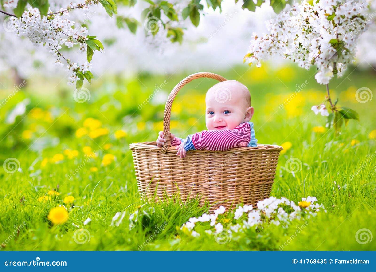 sweet baby in basket in blooming apple tree garden stock